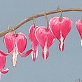 Bleeding Hearts by Anastasiya Malakhova