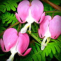 Bleeding Hearts by Laurie Marechaux