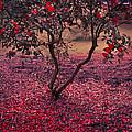 Bleeding Tree by Svetlana Sewell