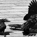 Blind Crow by Lauren Blazer