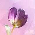 Blissfully Purple by Betty LaRue