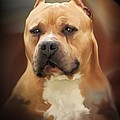 Blond Pit Bull By Spano by Michael Spano