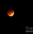 Blood Moon Eclipse S Florida 0315am April 15 2014 by Michelle Constantine