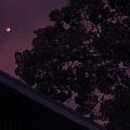 Blood Moon by Jennifer Ann Henry
