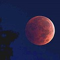 Blood Red Moon by Kevin  Schaack