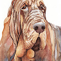 Bloodhound by Greg and Linda Halom