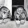 Bloodhound Puppies Dog Portrait  by Olde Time  Mercantile