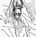 Bloodletting Chart, 1517 by Granger