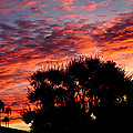 Bloody Sunset Over Palm Desert by Jay Milo