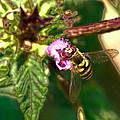 Bloom-fly  Leif Sohlman by Leif Sohlman