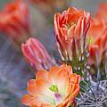 Bloom In Orange by Bryan Keil