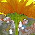 Bloom Yellow Daisy by Debra Schwab
