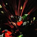 Bloomin Bew-t by Robert McCubbin