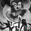 Bloomin' Kiss Vintage Art Bw by Lesa Fine