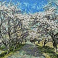 Blooming Cherry Tree Avenue by Dragica  Micki Fortuna