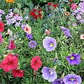 Blooming Extravaganza by Tina Camacho