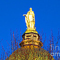 Blooming Golden Dome by Tina M Wenger