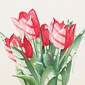 Sunlit Tulips by Sandra Neumann Wilderman