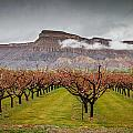 Blooming Orchards 2 by Laurie Purcell
