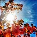 Blooming Sunlight by Derek Gedney