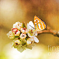 Blooms And Butterflies by Darren Fisher