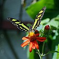 Blooms And Butterfly1 by Rob Hans