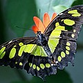 Blooms And Butterfly5c by Rob Hans