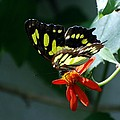 Blooms And Butterfly7c by Rob Hans
