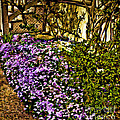 Blooms Beside The Steps by Nancy Marie Ricketts