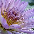 Bloom's Blush by Alycia Christine