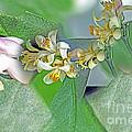 Blooms Of Lemon Tree by Elvis Vaughn