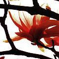 Blossom Abstract by Joseph Hedaya