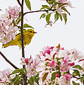 Blossom And Bird by Mircea Costina Photography