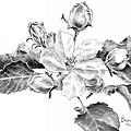 Blossom by Brenda Hill
