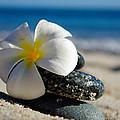 Blossom by Camilla Fuchs