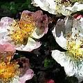 Blossom by David Lane