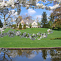 Blossom-framed House by Ann Horn