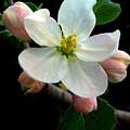 Blossom by Jessica Jenney
