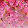 Blossom by Neil Finnemore