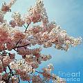 Blossom Sky by Jost Houk