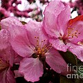 Blossom Time by Desiree Paquette