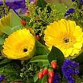 Blossom Yellow Gerbera by Abbigailstudio -