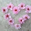 Blossoming Love by Vanessa Thomas