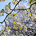 Blossoms And Leaves by Lydia Holly