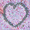 Blossoms Of Love - Cherry Blossoms 2013 - 071 by Metro DC Photography