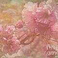Blossoms Splender by Arlene Carmel