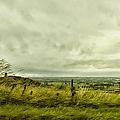 Blowing In The Wind by Margie Hurwich