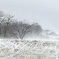 Blowing Snow Over Fields And Forest by Lynn Hansen