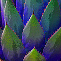 Blue Agave by Victoria Page