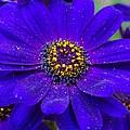 Blue And Bright by Rumesa Saddozai